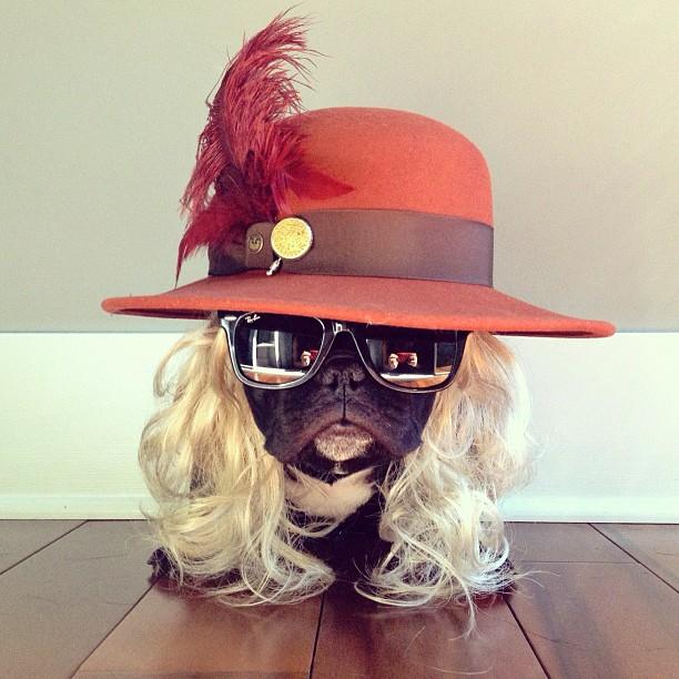 Perro bulldog disfrazado con peluca y sombrero